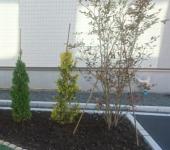 植栽 | 黒土 | 天然芝